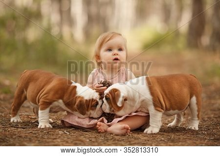 Cute Little Baby With Two English Bulldog Puppies Playing. Place For The Inscription. Concept: Relat