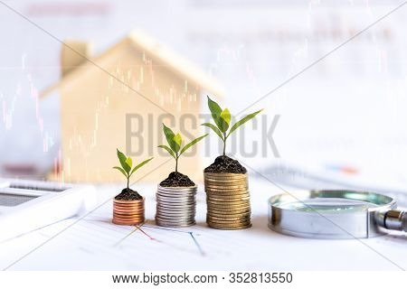 Investor Of Real Estate.  The Plants Growing On Money Coin Stack For Investment Home With Financial