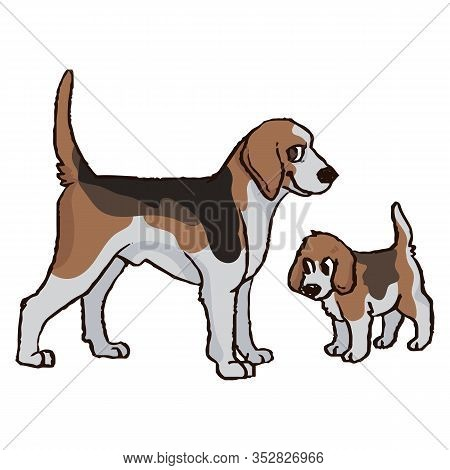 Cute Cartoon Foxhound Hunting Dog And Puppy Vector Clipart. Pedigree Kennel Doggie Breed For Dog Lov