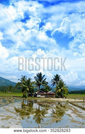 Palm Trees Surrounding Shack On A Rice Field In The Philippines