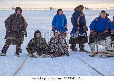The Extreme North, Yamal Peninsula, Deer Harness With Reindeer, Herd Of Reindeer In Winter Weather,