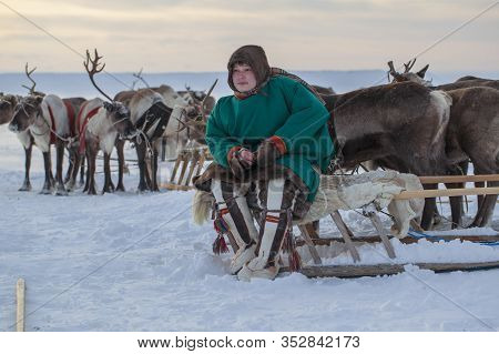 Nadym, Russia - February 23, 2020: The Extreme North, Yamal Peninsula, Deer Harness With Reindeer, H