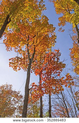 Color Transitions Against A Blue Sky In The  Louis M Groen Nature Preserve In Johannesburg, Michigan