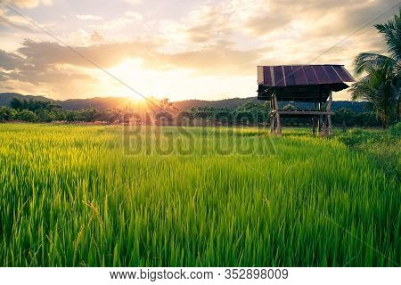 Rice Field With Sunset And Mountain Background In Rural Of Thailand.