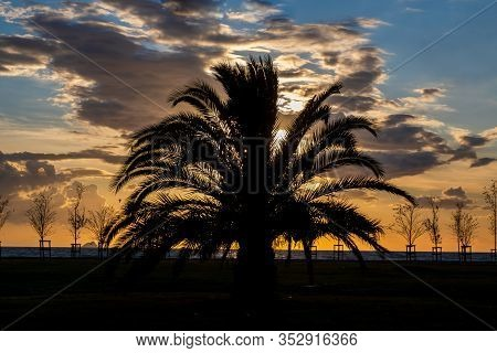 Silhouette Of A Palm Tree At The Sunset In The Park. Beautiful Dramatic Sky With Clouds.