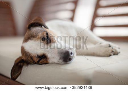 Sleeping dog at home. Pet sleep on sofa