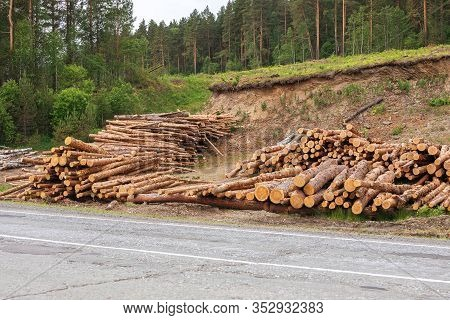 Wooden Logs On Background Of Forest. Large Woodpile From Sawn Debarked Pine Wood Logs