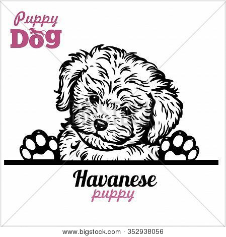 A Havanese Dog Puppy Peeked Over The Fence.
