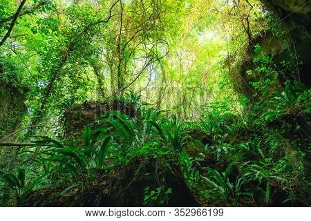 Wild lush forest with hart's tongue ferns growing on rocks in the Gironde department in France, near Bordeaux.