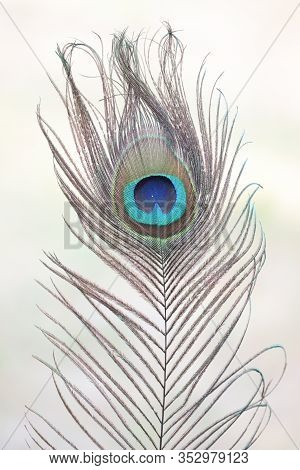 Peacock Feathers On A White Background. Beautiful Peacock Feather Morepankh Awesome,close-up Of Peac