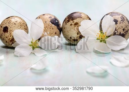Close-up Festive Easter Background With Spotted Quail Eggs And White Apple Tree Flowers On Light Pai