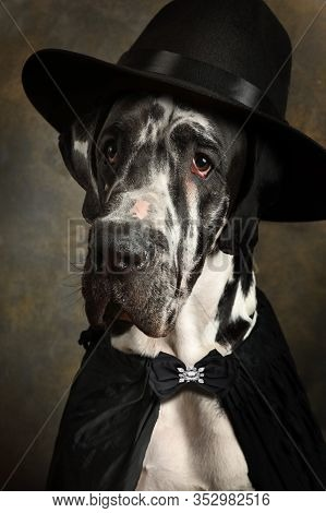Portrait Of A Pedigree Great Dane In A Black Cape And In A Hat With A Feather On A Brown Background