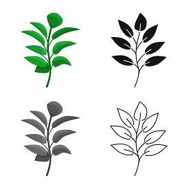 Vector Design Of Leaf And Coffee Logo. Collection Of Leaf And Plant Vector Icon For Stock.