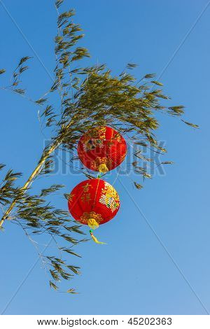 Chinese Lanterns In A Tree