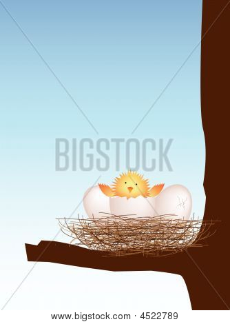 Hatching Chick In Nest