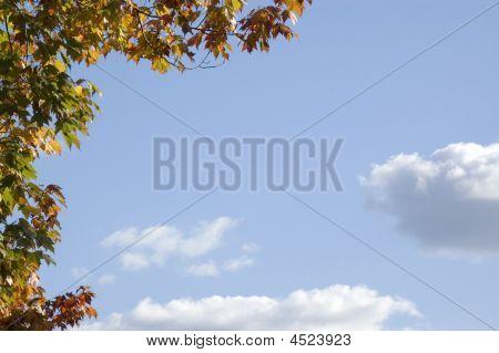 Maple Framed Sky