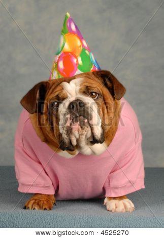 Birthday Dog On Blue