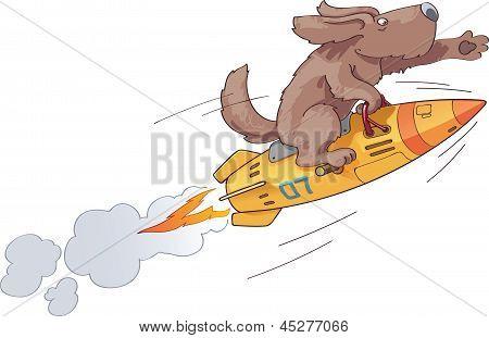 Rocket Dog