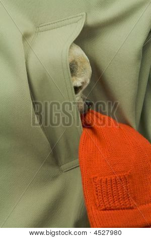 Dog In Pocket