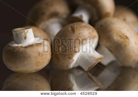 Portabella Mushroom On Glass