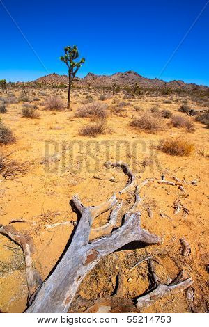Joshua Tree National Park Yucca Valley in Mohave desert California USA