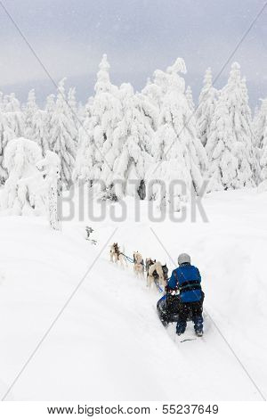 sledge dogging, Sedivacek''s long, Czech Republic