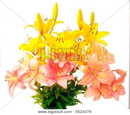 Bouquet Of Flowering Lily