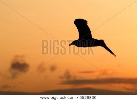 Gull And Sunset