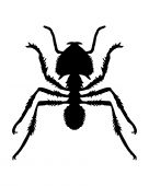 Black and white illustration of an ant poster