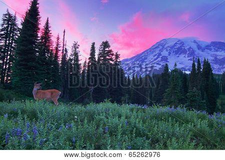 Mount Rainier Meadow Sunset