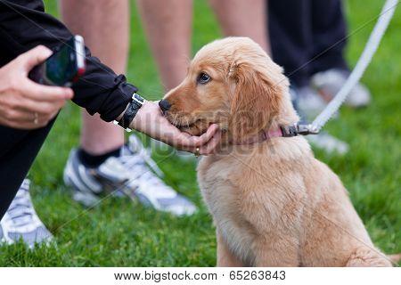 Puppy Affection