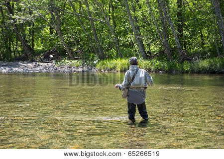 Fisherman catches of salmon fly fishing in the river in may.