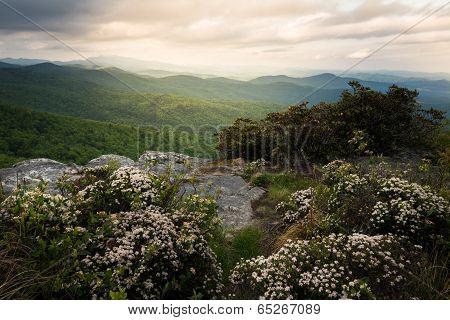Hawksbill in Bloom