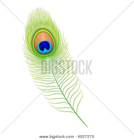 Peacock feather. Vector.