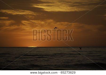 Birds at Sundown
