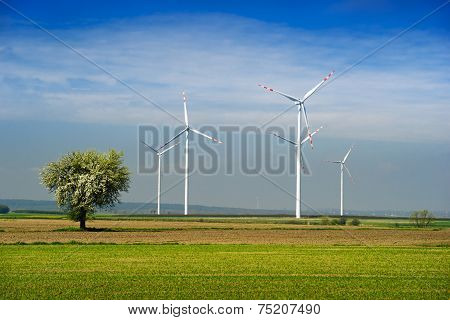 Wind park and tree.