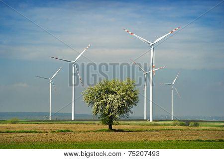 Wind farm and tree.
