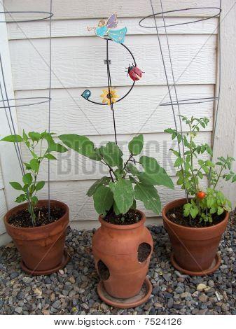 Stock Image Of Garden Plants