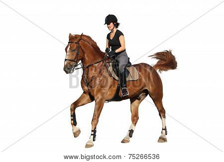 Brunette Woman Cantering On Chestnut Horse Isolated On White