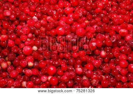 Background Cowberry