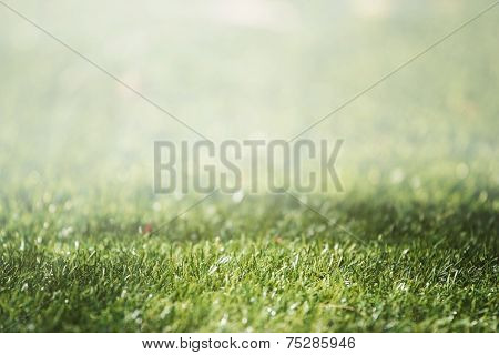 grass With Selective Focus And Beautiful Natural Bokeh