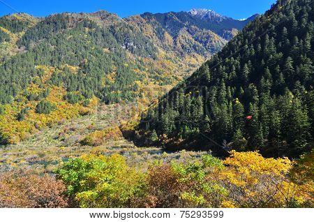 Autumn scenery of trees at Jiuzhaigou valley poster