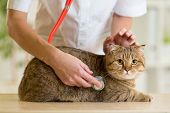 Veterinary doctor pet checkup with stethoscope poster