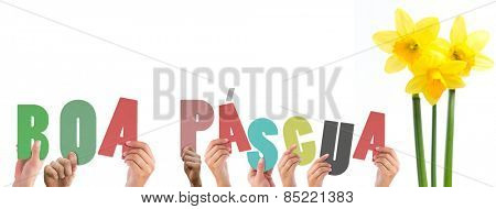 Hands holding up boa pasqua against pretty yellow daffodils with stems