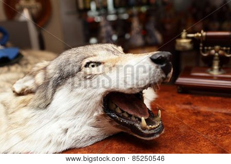 Head Of Stuffed Wolf