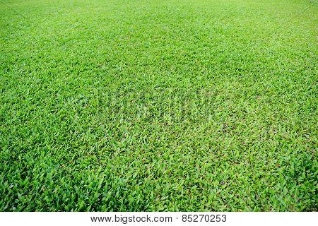 Green grass soccer pitch