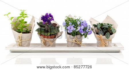 Spring Flowers And Plants In Paper Packaging