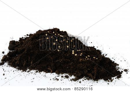 Spinach seeds in some soil