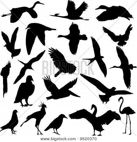 Birds Collection - Vector