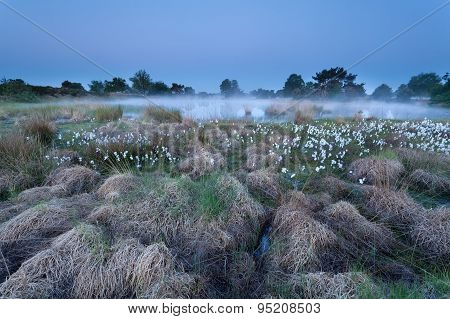 Dusk On Misty Swamp